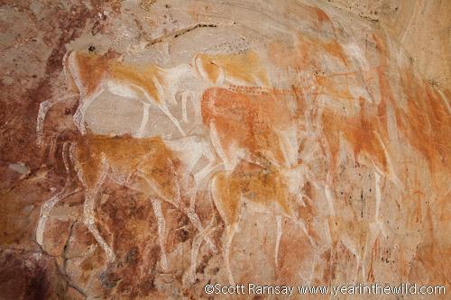 San rock art in Cederberg