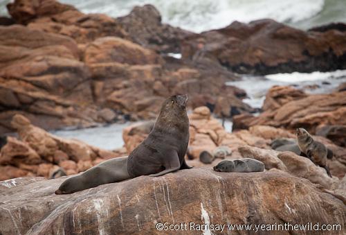 Basking seals...