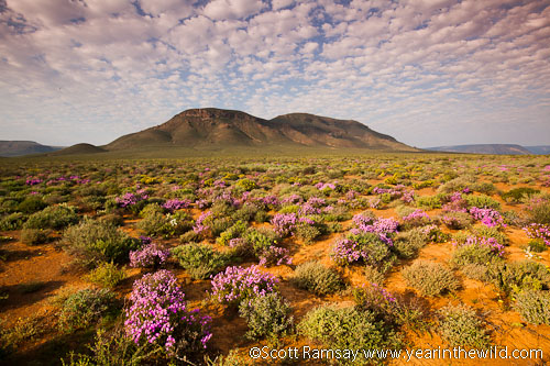 The Roggeveld Mountains in the east of the Tankwa Karoo