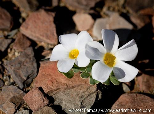 Blooming flowers 2
