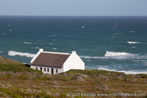 Koppie Alleen in De Hoop, where most of the whales are seen