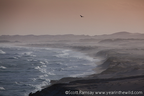 Seagull and coastline at De Hoop...wild and windy