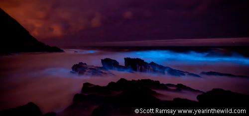 Phosphorescence in the crashing waves...