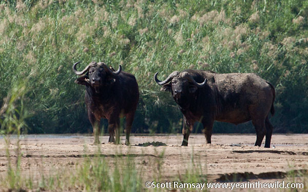 These buffalo stared us down as we neared the end of the trail