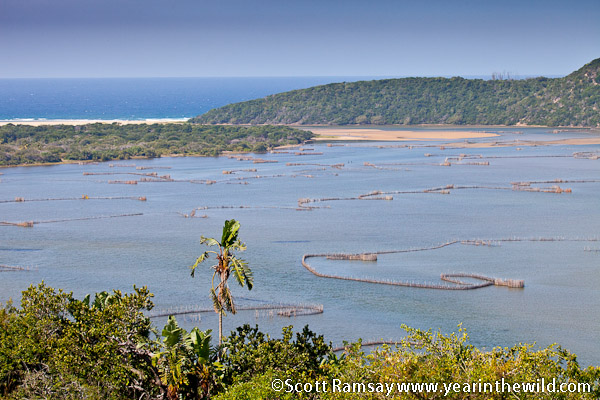 The estuary at Kosi Bay, and the fish traps used by the local Tongan people for more than 1000 years