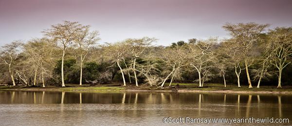 The fever trees at Nyamithi Pan