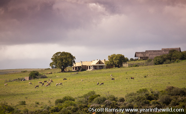 The manor house at Gorah, with herd of eland in foreground, and tents at back right
