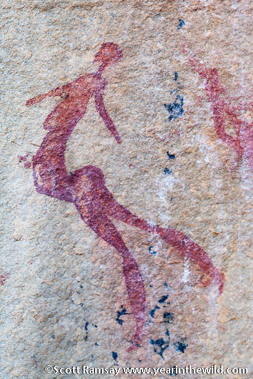 Bushmen rock art at Anysberg Nature Reserve - for an excellent book on the rock paintings of the Little Karoo, check out Renee Rust's Water, Stone and Legend.