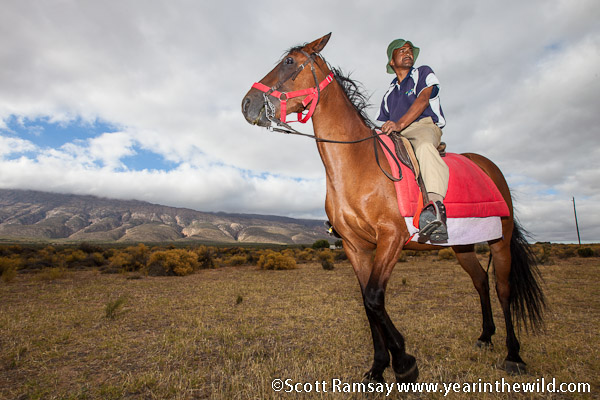 Ranger Willem Volhard and one of the horses, which can be hired by guests for both short and long guided trails...