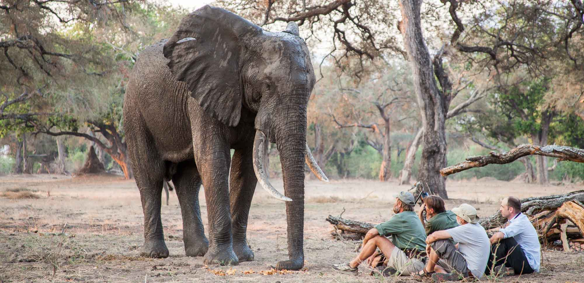 Bull elephant and Stretch Ferreira in Mana Pools National Park in Zimbabwe