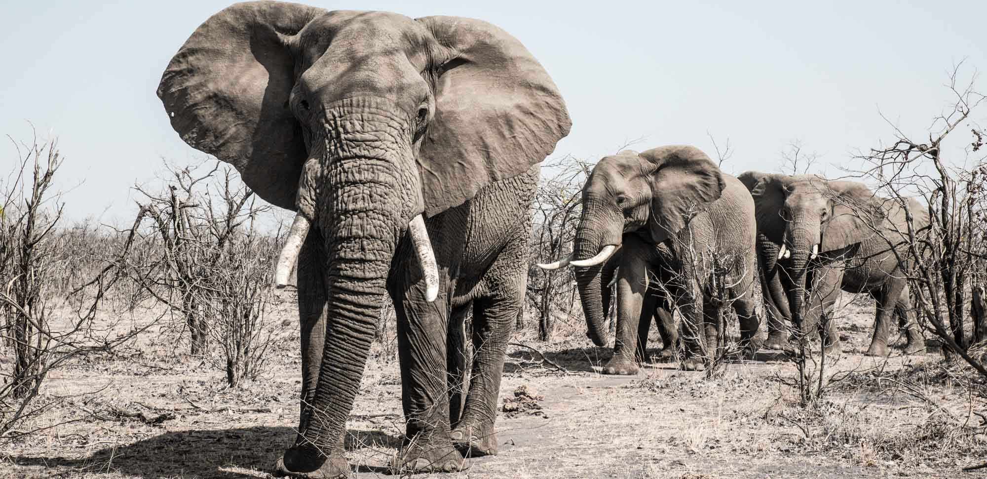 Elephants in Gonarezhou National Park in Zimbabwe