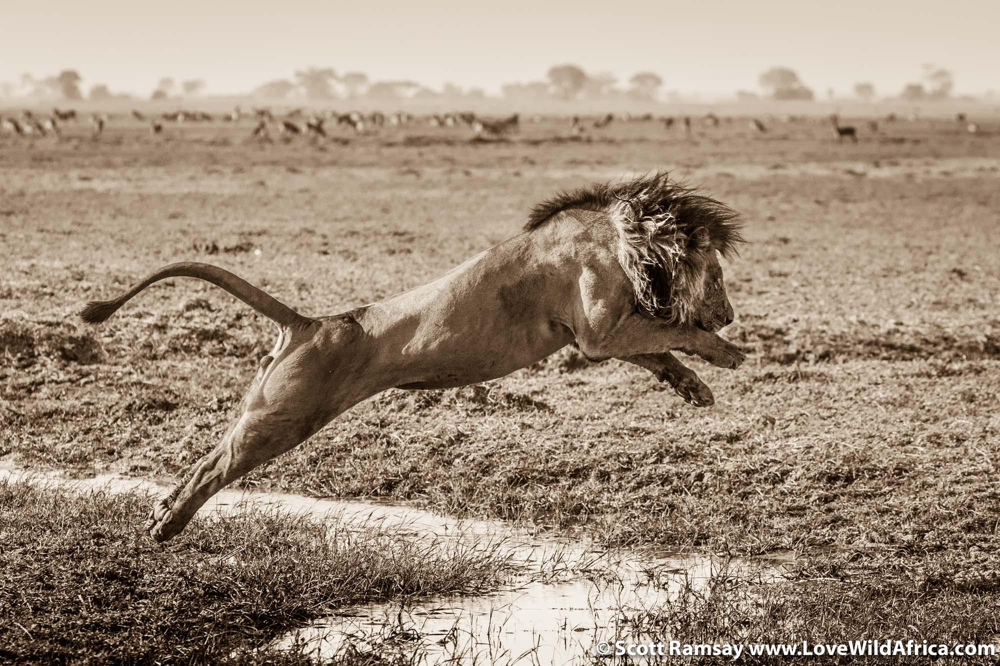 Busanga Plains - Kafue National Park - Zambia