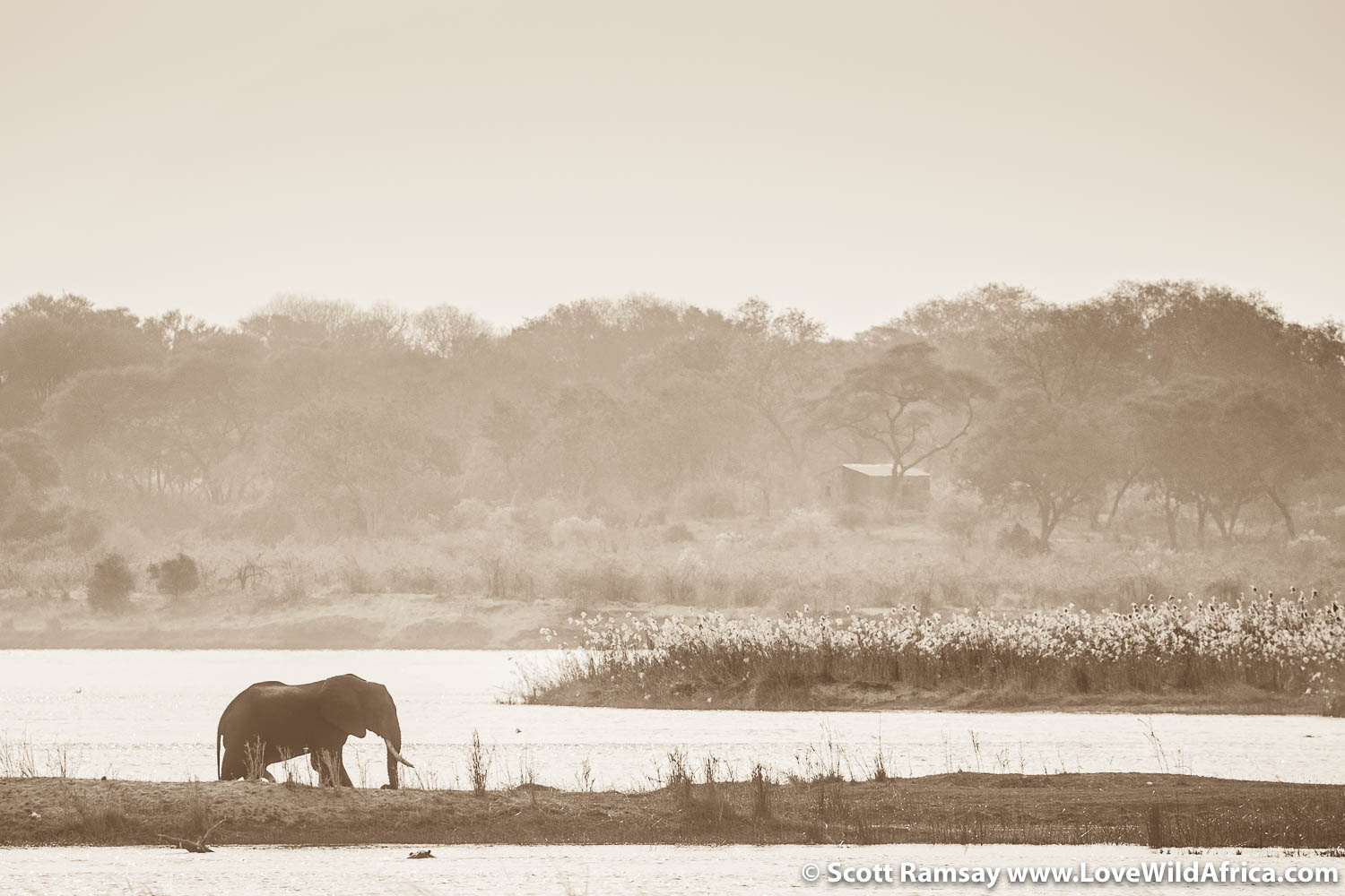 Elephant and village on Zambezi River
