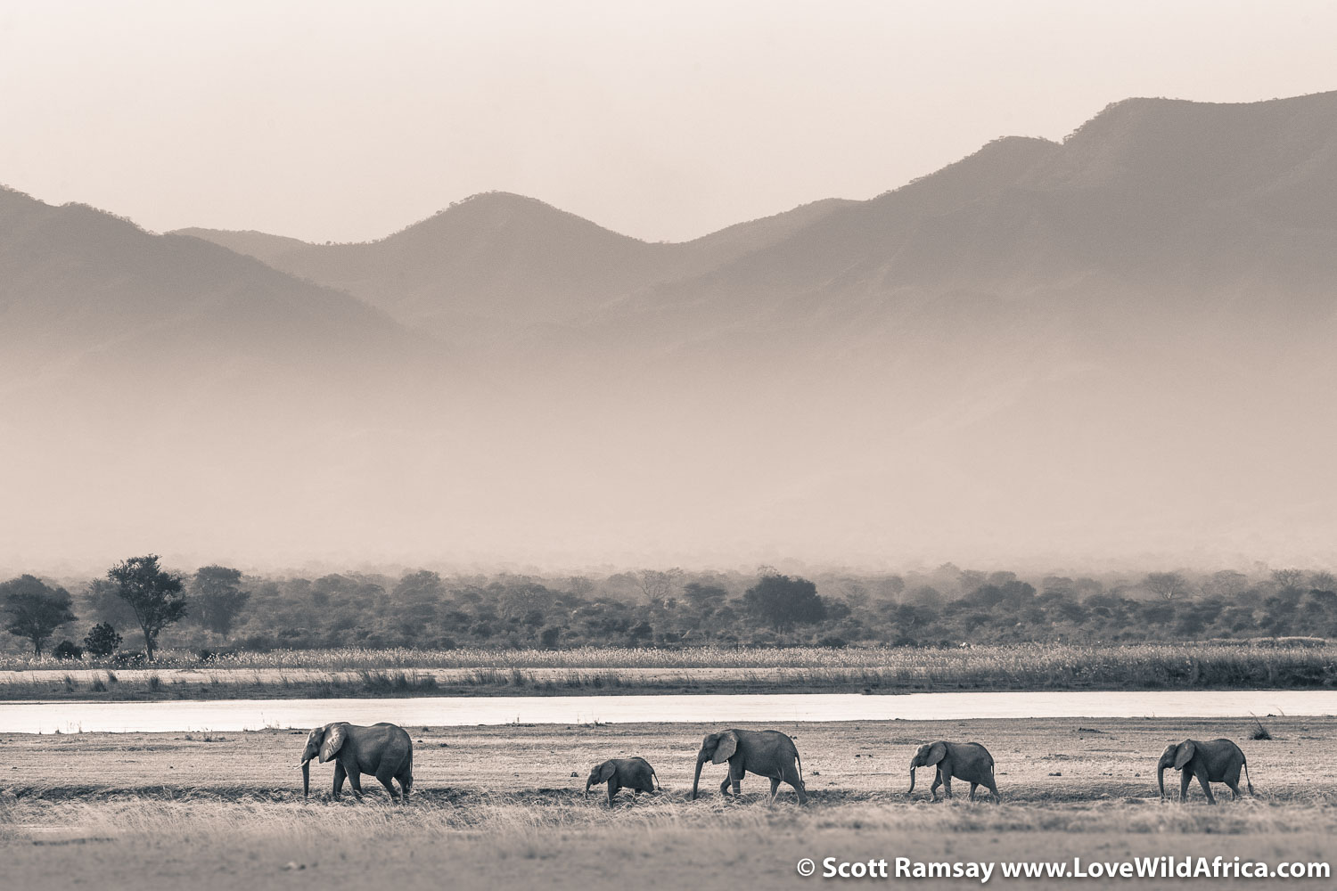 Elephants on Zambezi River in Mana Pools