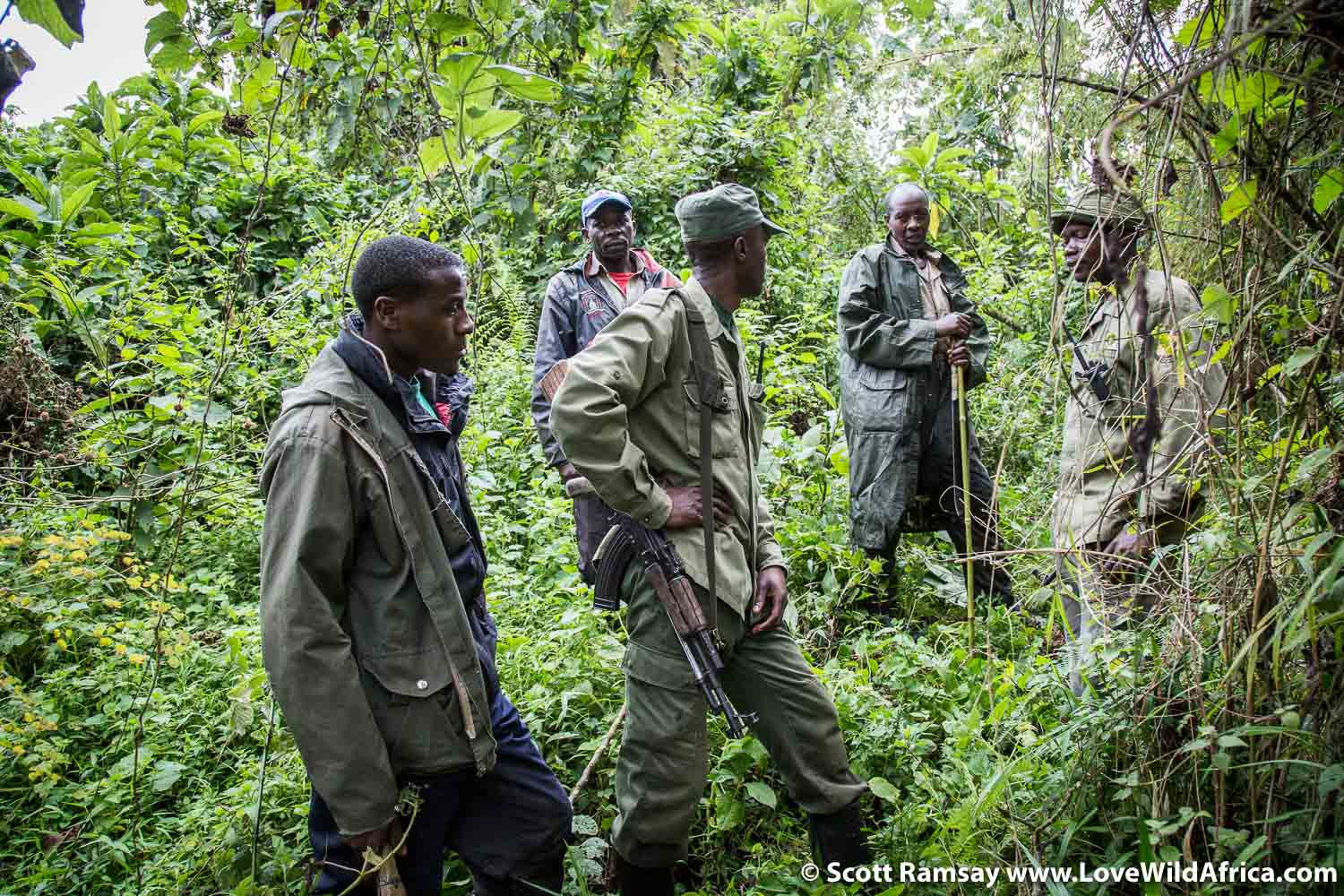 After about two hours of trekking on the slopes of Mount Mikeno, guided by two armed rangers, met up with the trackers who had earlier gone out to locate the gorilla family.