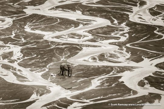 Bull elephant crossing White Imfolozi River - Hluhluwe-Imfolozi Park - South Africa