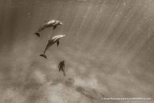 Dancing with dolphins - Quirimbas National Park - Mozambique