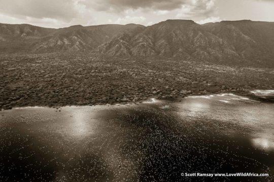 Flamingos - Lake Bogoria - Kenya
