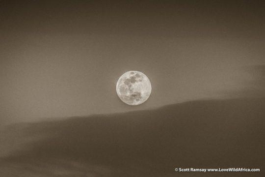 Full moon - Maasai Mara - Kenya