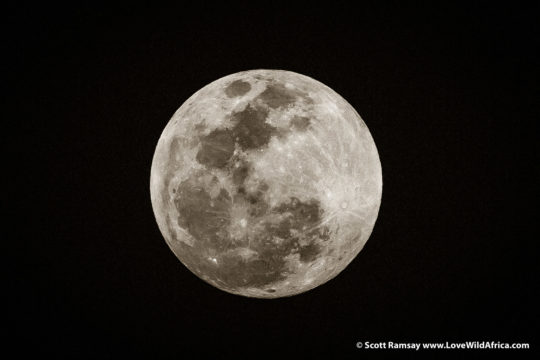 Full moon - Hwange National Park - Zimbabwe