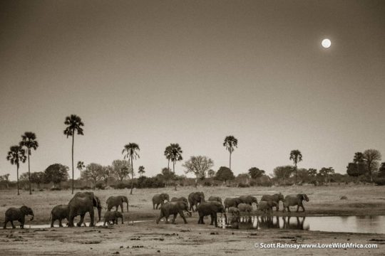 Full moon rising and elephant herd - Hwange National Park - Zimbabwe