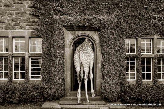 Giraffe Manor - Nairobi - Kenya
