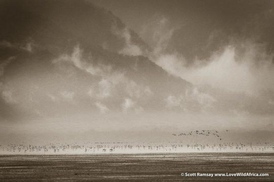 Flamingos - Lake Manyara - Tanzania