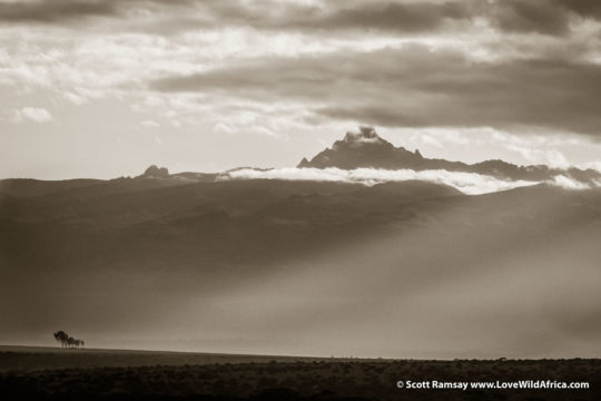 Mount Kenya from Solio Ranch - Kenya