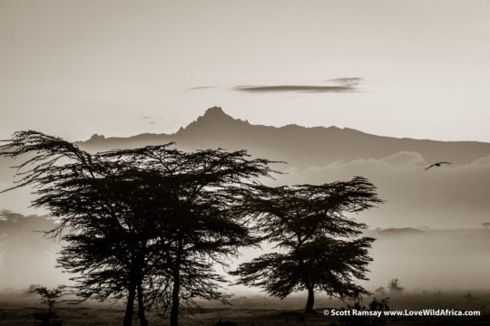 Mount Kenya from Solio Ranch - Laikipia - Kenya