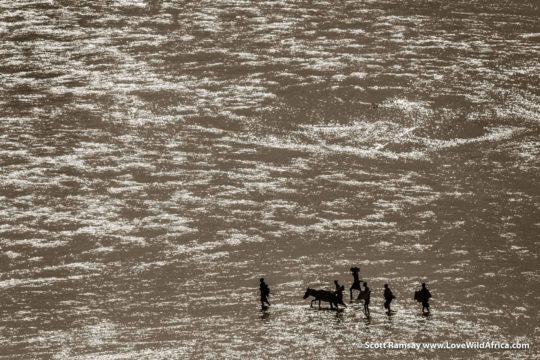 Samburu crossing Ewaso Ngiro River - Samburuland - Kenya