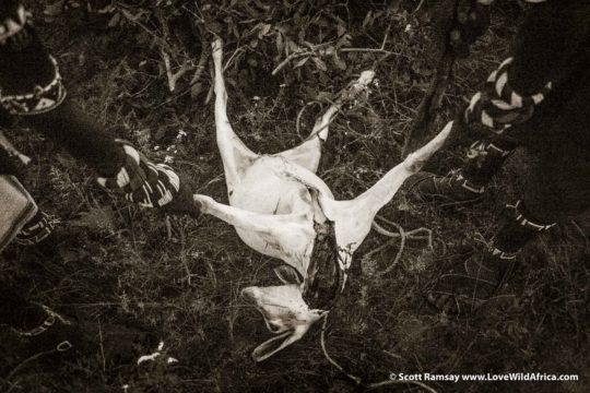 Slaughtered Goat - Samburuland - Kenya