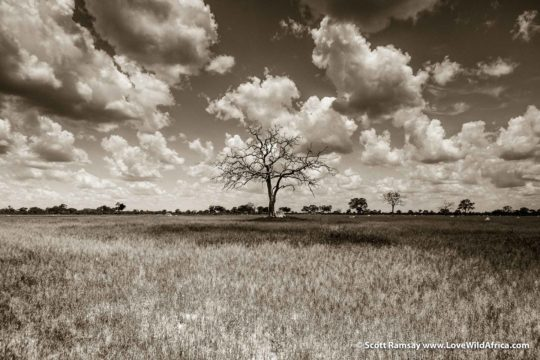 Summer clouds - Hwange National Park - Zimbabwe
