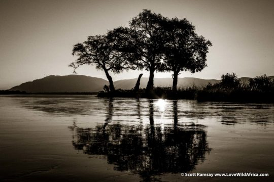 Trees at sunset on Zambezi River - Mana Pools National Park - Zimbabwe