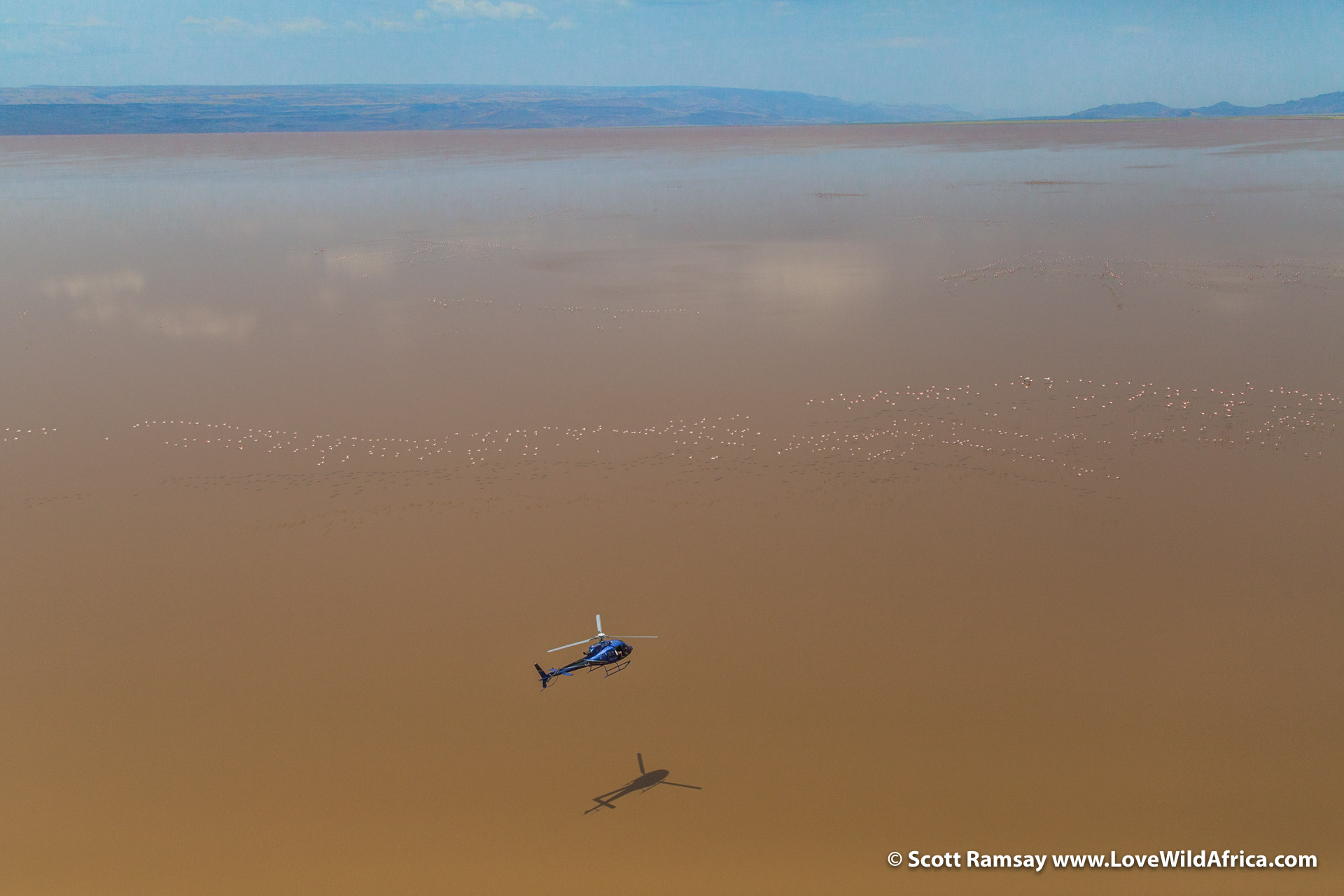 The rift valley soda lakes - like Lake Logipi - are highly saline and alkaline, and toxic to most animals, except flamingos, who thrive by feeding on the microscopic cyanbobacteria alga.