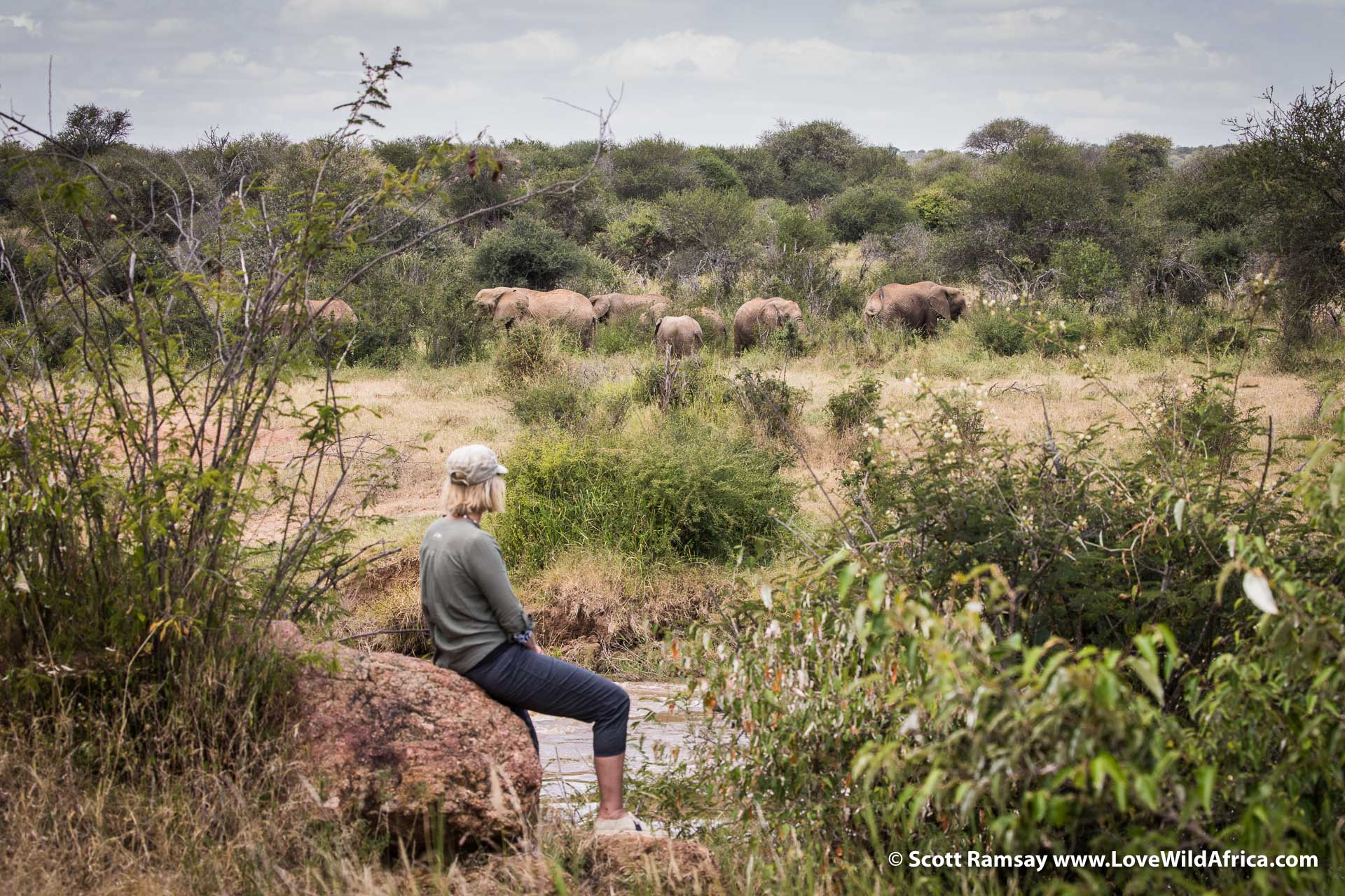 "Tanya Carr-Hartley ""working""...spending time with elephants."